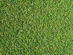 ベント芝 ゴルフ 種類