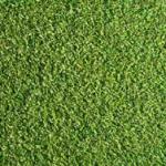 芝の読み方・種類・芝目「芝がわかればゴルフが変わる!」