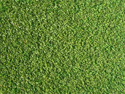 芝の読み方種類芝目